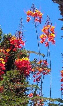 Palm springs flowers pure film creative palm springs flowers mightylinksfo